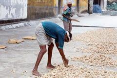 Travailleurs de gingembre dans le fort Cochin, Inde Image stock