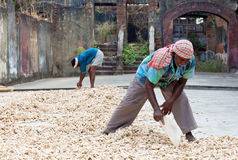 Travailleurs de gingembre dans le fort Cochin, Inde Photographie stock libre de droits