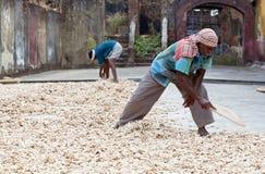 Travailleurs de gingembre dans le fort Cochin, Inde Images stock