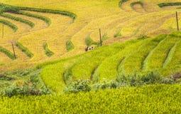 Travailleurs de Hmong sur des terrasses de gisement de riz images libres de droits