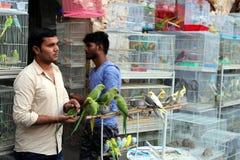 Travailleurs de magasin de bêtes dans Doha photo libre de droits