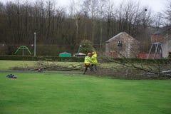 Travailleurs enlevant l'arbre cassé en parc images libres de droits