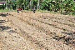 Travailleurs sarclant dans la ferme image libre de droits