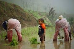 Travailleurs transplantant des jeunes arbres de paddy avec peu d'enfant Photo stock
