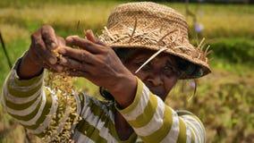 Travailleuse active aux gisements de riz de Bali Photo stock