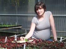 Travailleuse active enceinte Photographie stock libre de droits