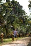 Travaler del giovane che cammina in un parco della palma su Ko Chang, migliore destinazione di viaggio della Tailandia nell'april immagine stock libera da diritti