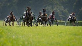 Travalopp för häst Royaltyfria Foton