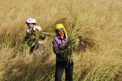 Travaux chinois d'agriculteurs durs sur la zone Photographie stock libre de droits