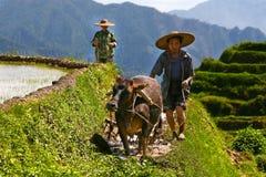 Travaux chinois de fermiers durs sur le gisement de riz Photographie stock libre de droits
