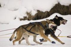 Travaux d'équipe de l'hiver Photo stock