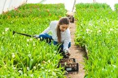 Travaux de femme de jardinier photos stock