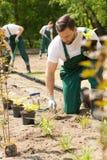 Travaux intenses de jardin rendant des gardiens de parc occupés Images libres de droits