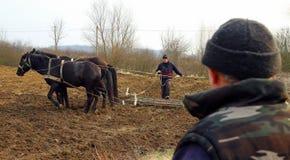 Travaux sur le terrain de ressort dans les zones rurales de la Transcarpathie Image stock