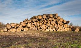 Travde treestammar Arkivbild
