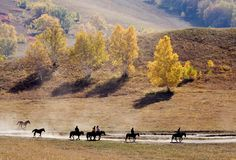 Travel. A few people  are riding on the horses Stock Images