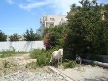 Travel Albania Durres region in Adriatic royalty free stock images
