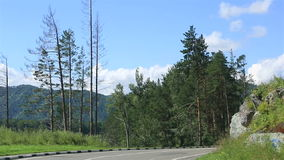 Travel along the roads of the Altai Krai. stock video