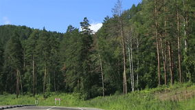Travel along the roads of Altai Krai. stock video footage