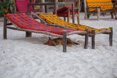 Travel around Tanzania. A dog on the beach. Nature of Zanzibar. stock images