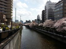 Cherry trees in Tokyo stock photography