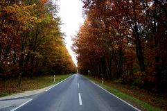 Road through autumn forest. Travel in autumn forest Royalty Free Stock Photography