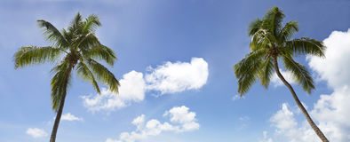 Travel background, panorama view palm trees on blue sky Stock Photography