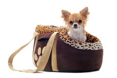 Travel bag and chihuahua Royalty Free Stock Images