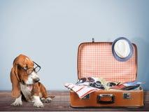 Travel. Bag dog humor tourist full case Stock Photos