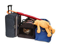 Travel bags and pet carrier Stock Photography
