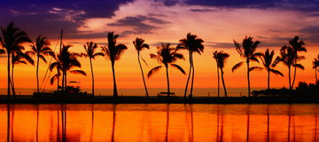 Travel banner - Beach paradise sunset palm trees. Travel banner. Beach paradise sunset with tropical palm trees. Summer travel holidays vacation getaway colorful Stock Images