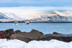 Travel Beautiful view of the Iceland winter season by ferry or c. Ruise ship. Snow-capped mountain in the background Royalty Free Stock Photos