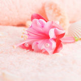 Travel concept with delicate pink flower fuchsia, seashells Royalty Free Stock Images