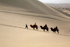 Travel in desert. Some travellers pass through the desert by camels Royalty Free Stock Photos