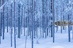 Travel Destinations Ideas. Illuminated Wooden House. Located in Tranquil Picturesque Nordic Forest in Scandinavia At Christmas Time.Horizontal Image Orientation Stock Photography