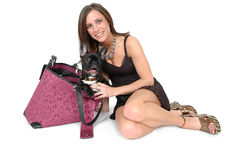 Travel Dog. Beautiful fashionable woman with her French Bull dog in her carry around bag. Woman toting her dog around. Travel Dog Stock Images
