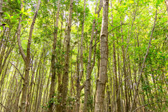 Travel Ecotourism Write down the information. Travel Ecotourism Write down in the wood Golden Meadow Prong thailand Stock Photo