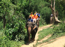 Travel on the elephant Royalty Free Stock Photos