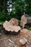 Travel felled logs Stock Images