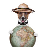 Travel globe compass dog safari explorer royalty free stock photos