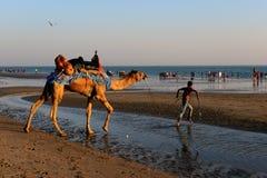 Travel Gujarat Royalty Free Stock Photography