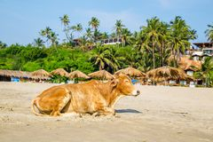 Travel in India. Beautiful scene in Goa, India Stock Image