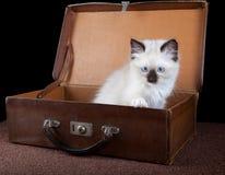Travel kitten stock photos