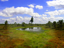 Travel Latvia: Lake in Kemeri marshland Stock Image