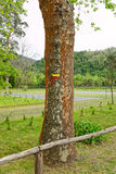Travel marks on trees Royalty Free Stock Photo