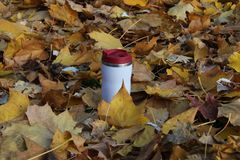 Travel  mug outdors. Travel  mug  in yellow  leafs outdoor Royalty Free Stock Photography