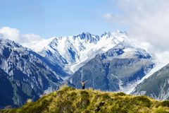 Travel New Zealand, Mount Fox. Scenic view of southern alps, mount cook and glaciers. Small person / tourist woman with hands up e. Njoying life. Outdoor/travel stock photos