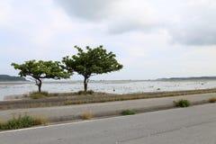 Travel in Okinawa, Japan. Photo taken in the island of Kourijima. two trees grow next to the sea Stock Photo