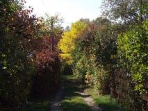Travel through old gardens in golden autumn Stock Image