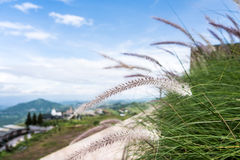Travel place at Khao Kho, Phetchabun Thailand. Looking from Pino Latte Resort stock images